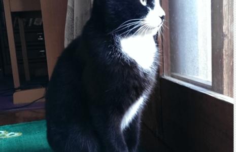 二匹目の猫を買う際の注意点と失敗談